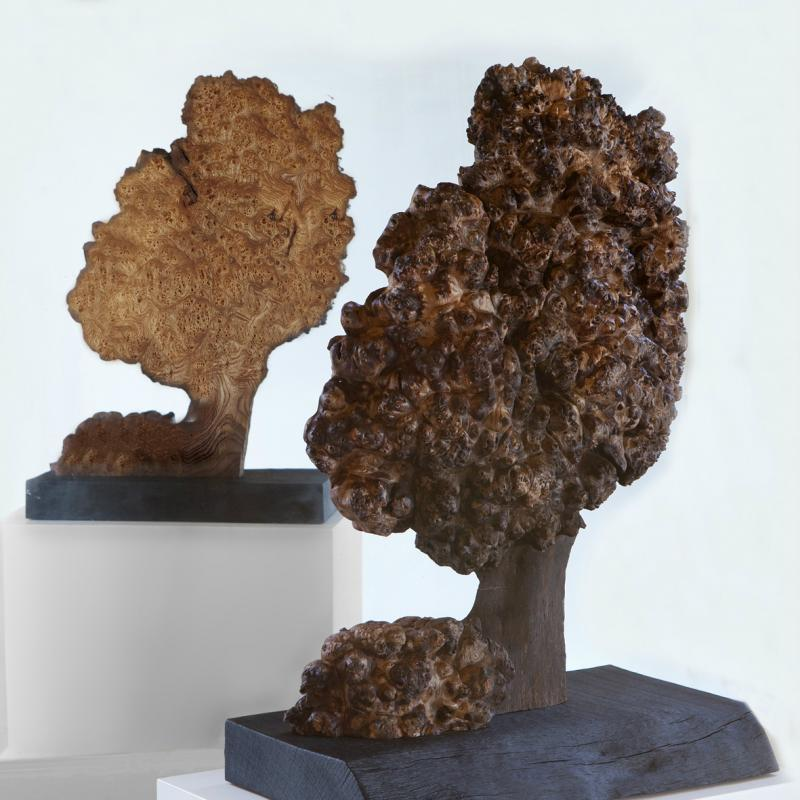 Burr Elm Tree 1 by Suzanne Hodgson