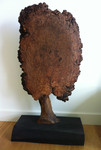 Burr Elm Tree 2 by Suzanne Hodgson